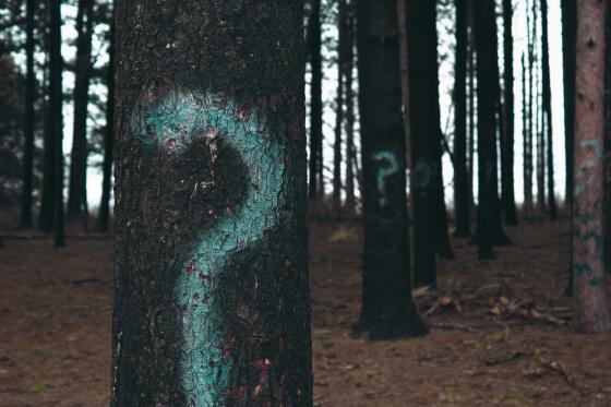 otázniky v lese